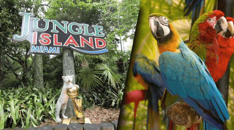 Resultado de imagem para jungle island miami
