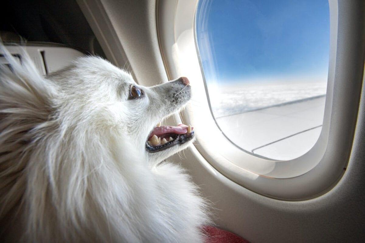 Foto Shutterstock livre de direitos autorais